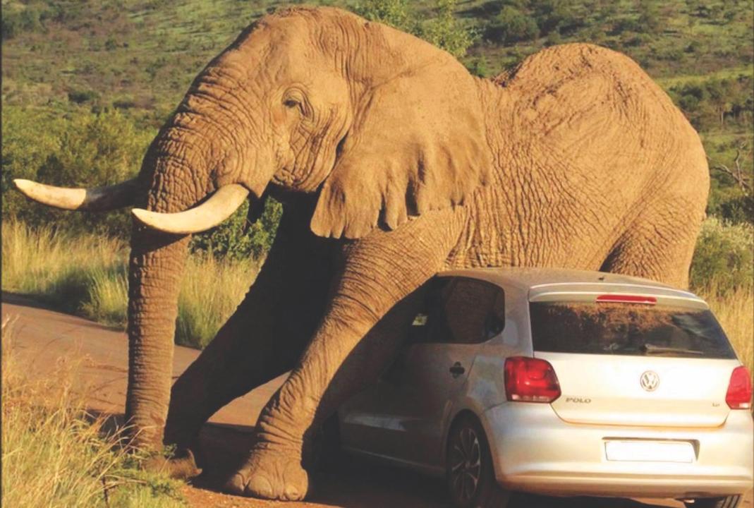 Tesla elephant