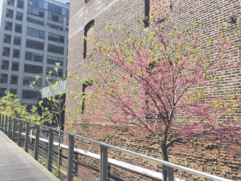 Travel The High Line