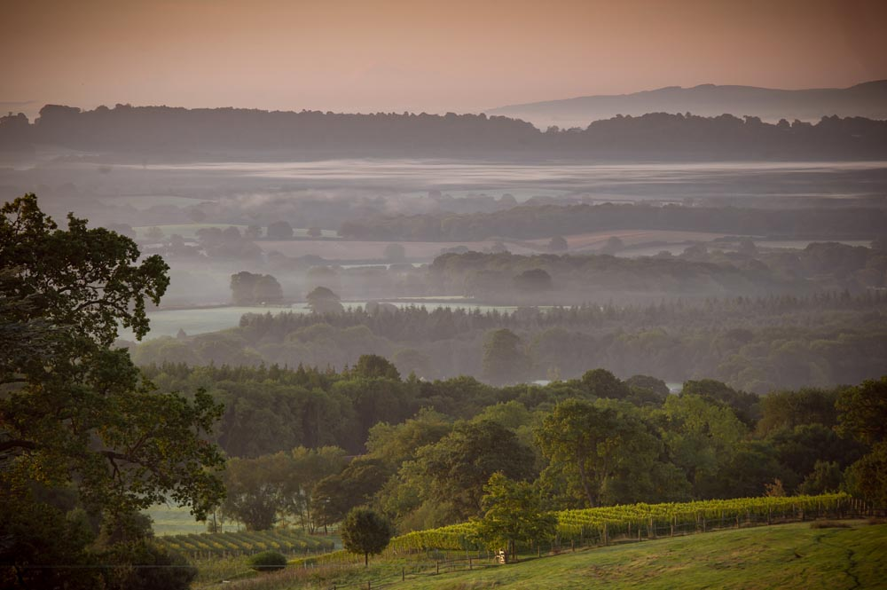 Blackdown Ridge Vineyard 2